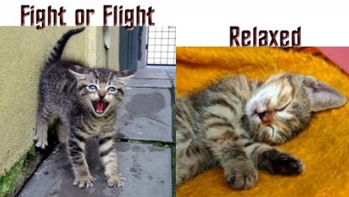 fight vs relax