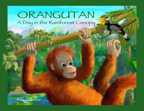 Orangutan: A Day in the Rainforest Canopy by Rita Goldner